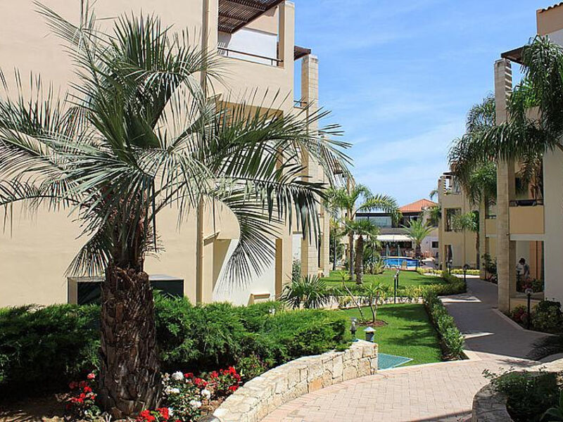 Creta Palm